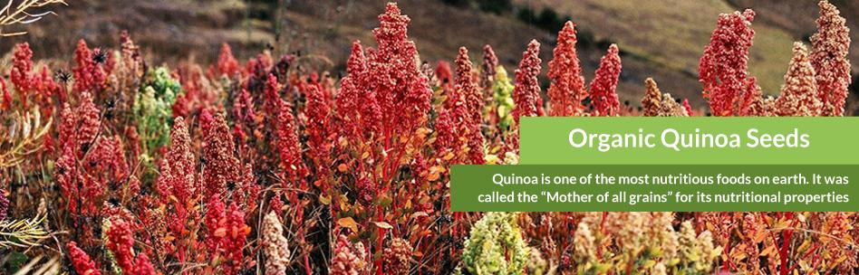 organic_quinoa_seeds-slide